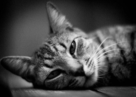 phil's cat