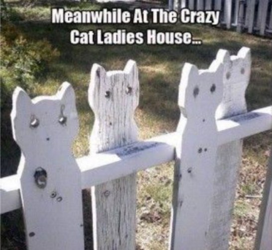 cat lady fence