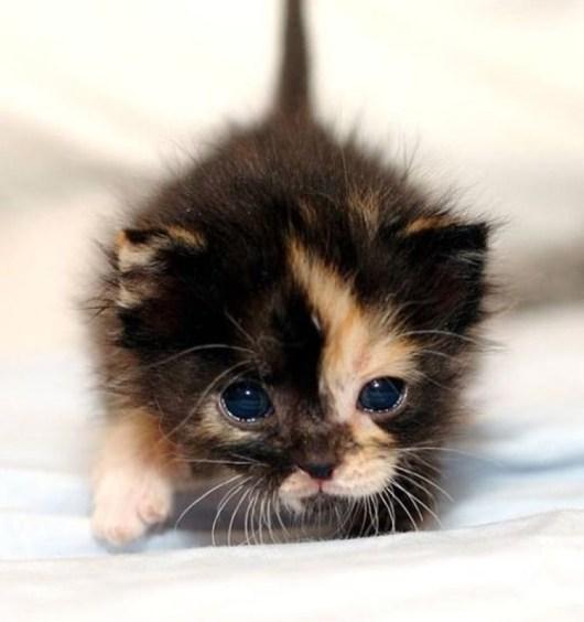 cutie kitten