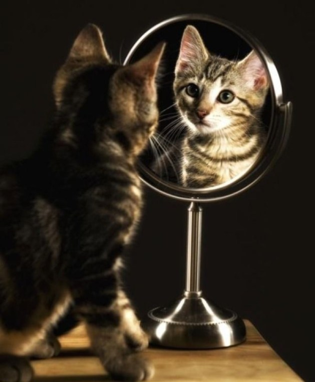 Mirror_Mirror15