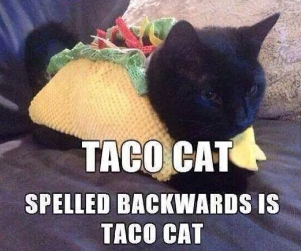 Taco-Cat