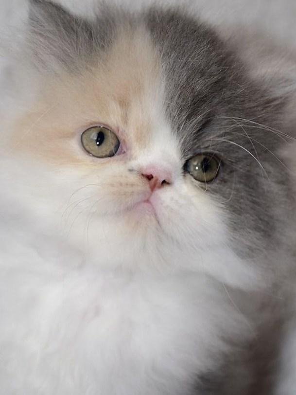 cute face
