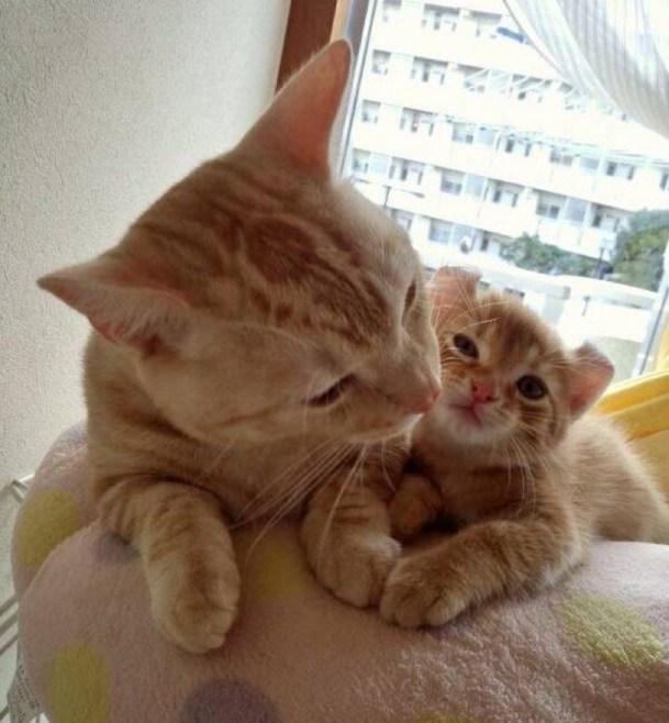 ginger mama and baby