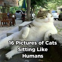 16 Pictures of Cats Sitting Like Humans
