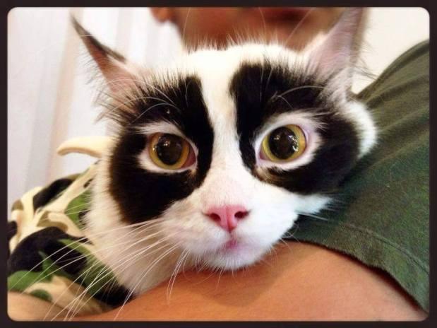 panda cat 3