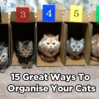 15 Great Ways to Organise Your Cats