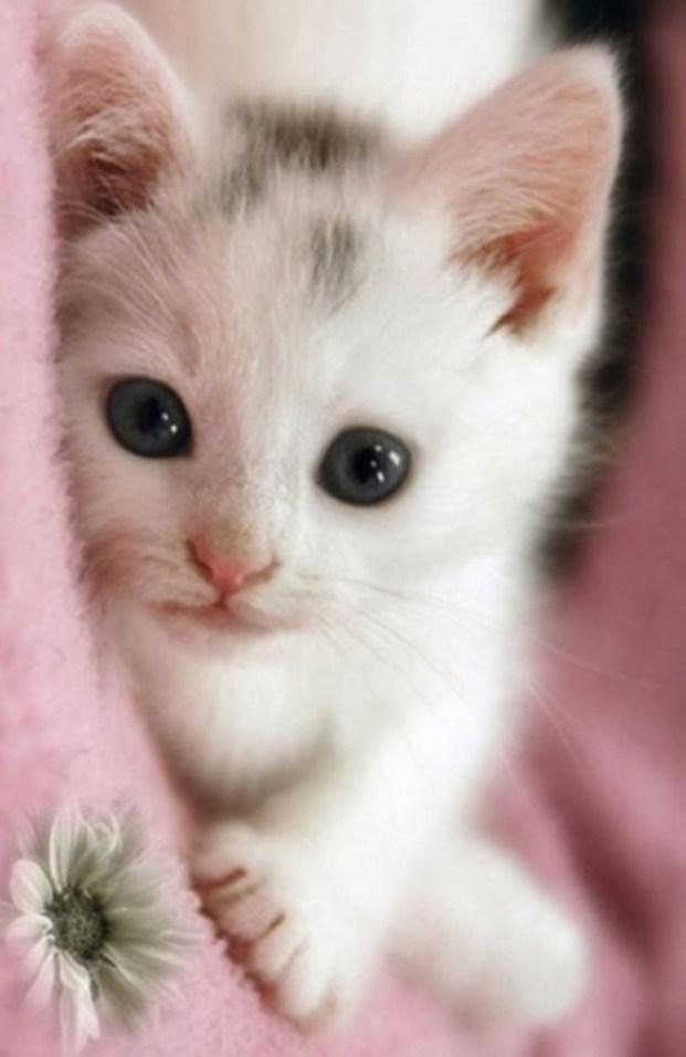 am i cute copy 3