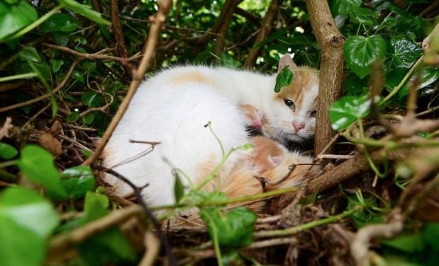 birds nest 1