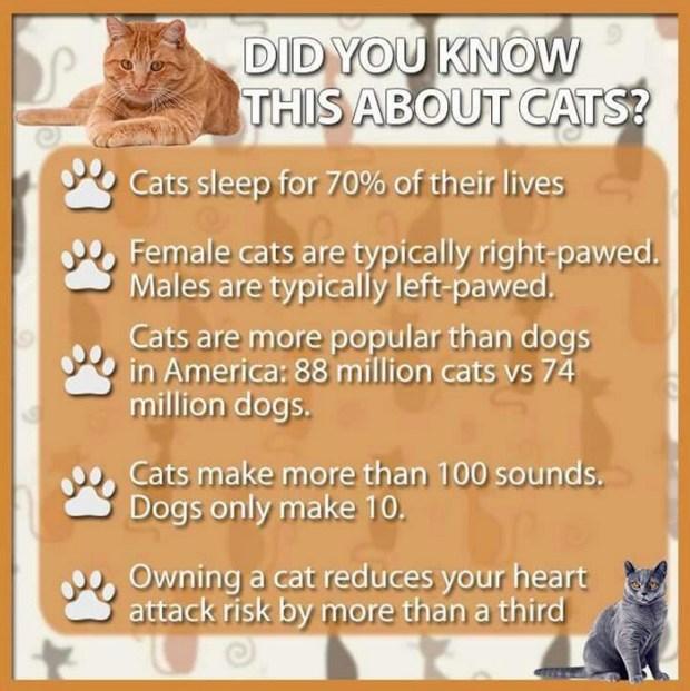 cat info