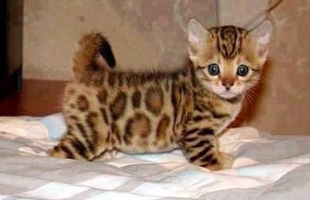omg! what a cutie