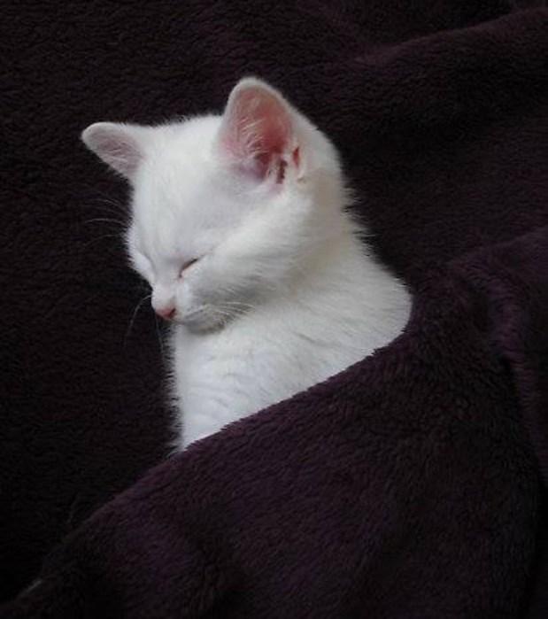 pocket kitty copy