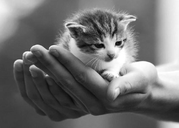 tiny in hand