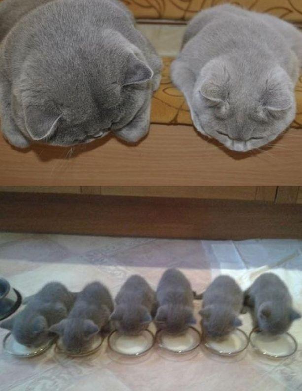 cuteness heaven