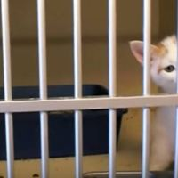 Too Cute!! See a Little Kitten Choose His Human For Adoption