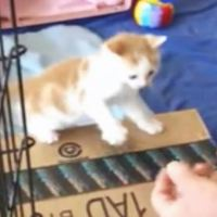Tiny Kitten Jumps Into Human Hands