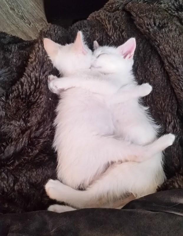 kitten cuddles copy