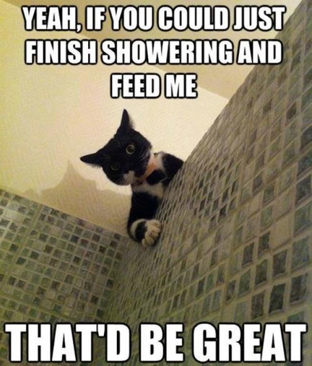 lol cat shower
