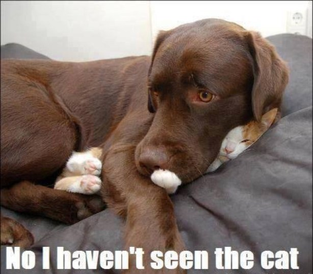 not seen cat lol