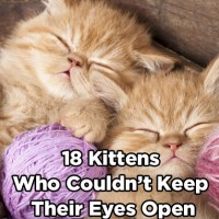 18 Kittens Who Couldn't Keep Their Eyes Open