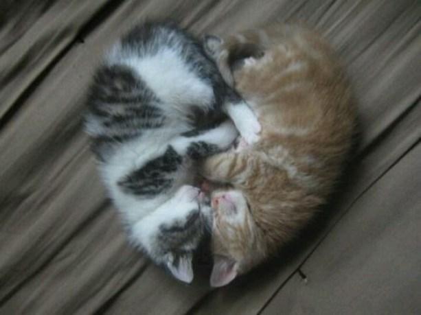 cat heart kitten