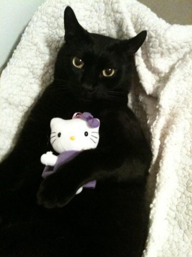 hello kitty (2)