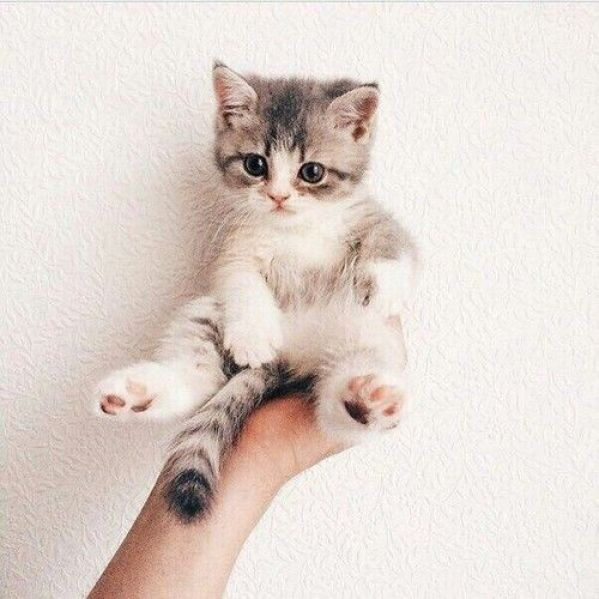 kitty in hand