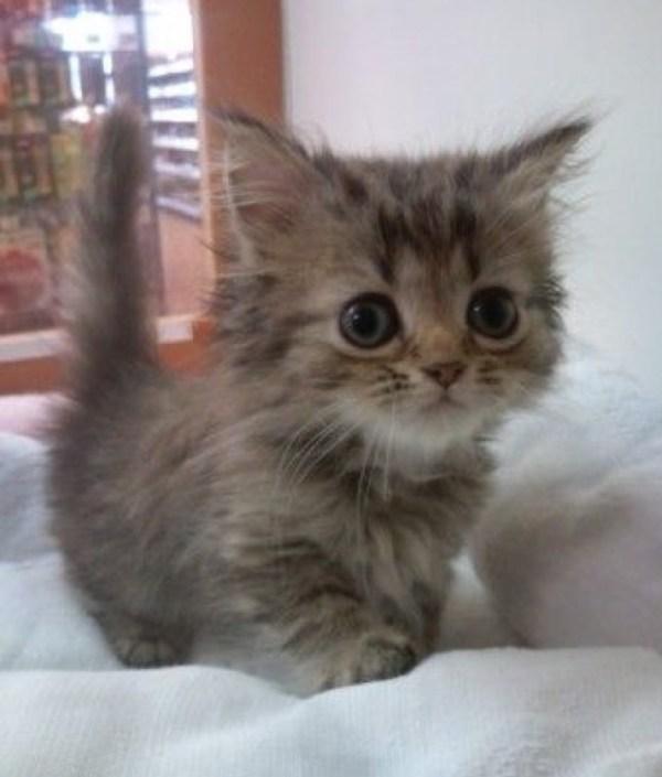 no1 cutie