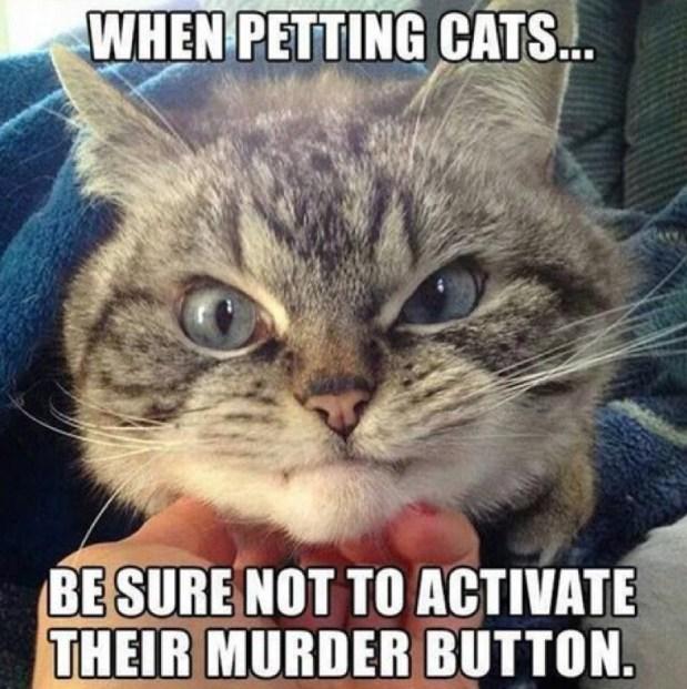 petting lol