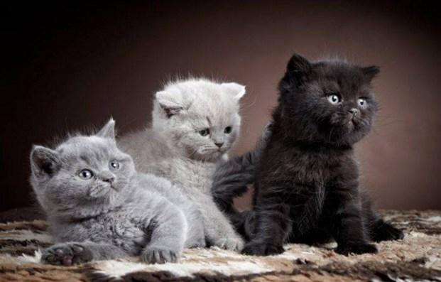 3 shades of grey