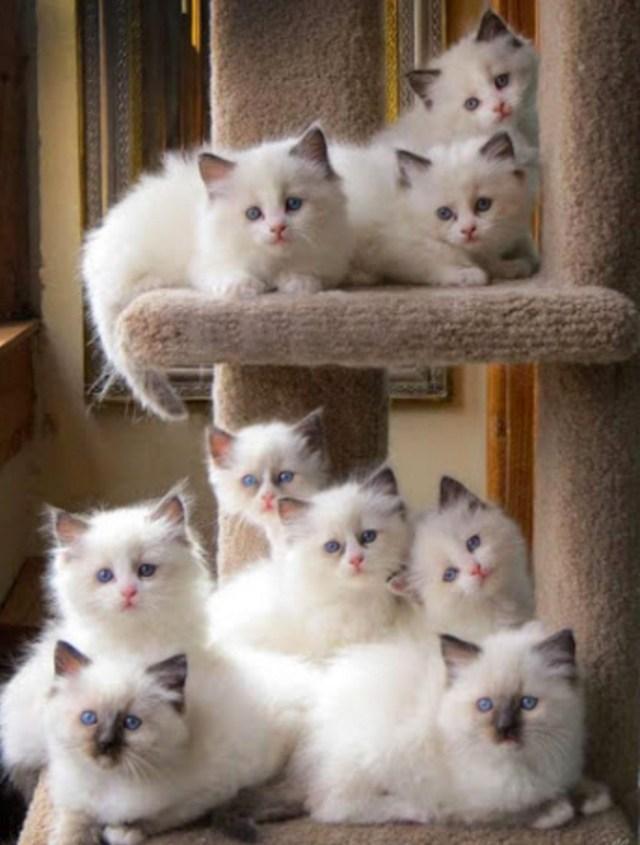 9 kittens