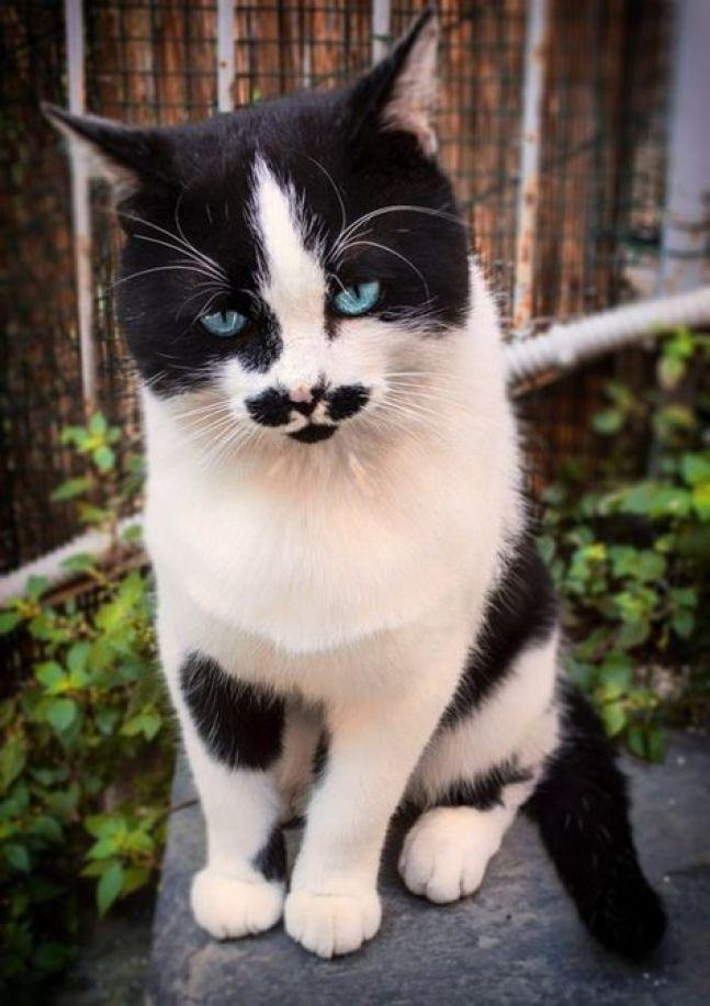 blue eyes moustasche