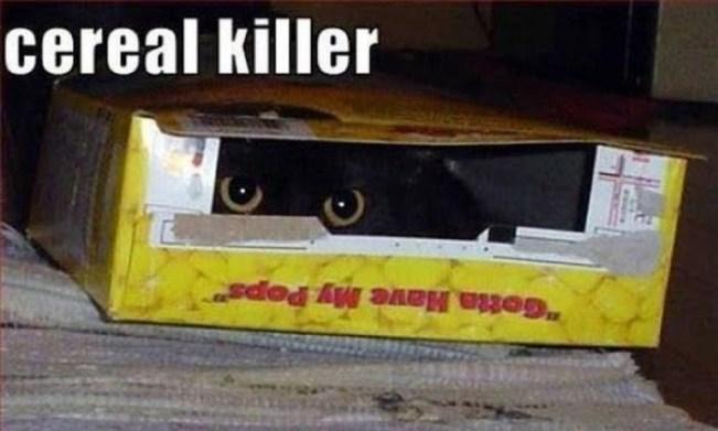 cereal killler