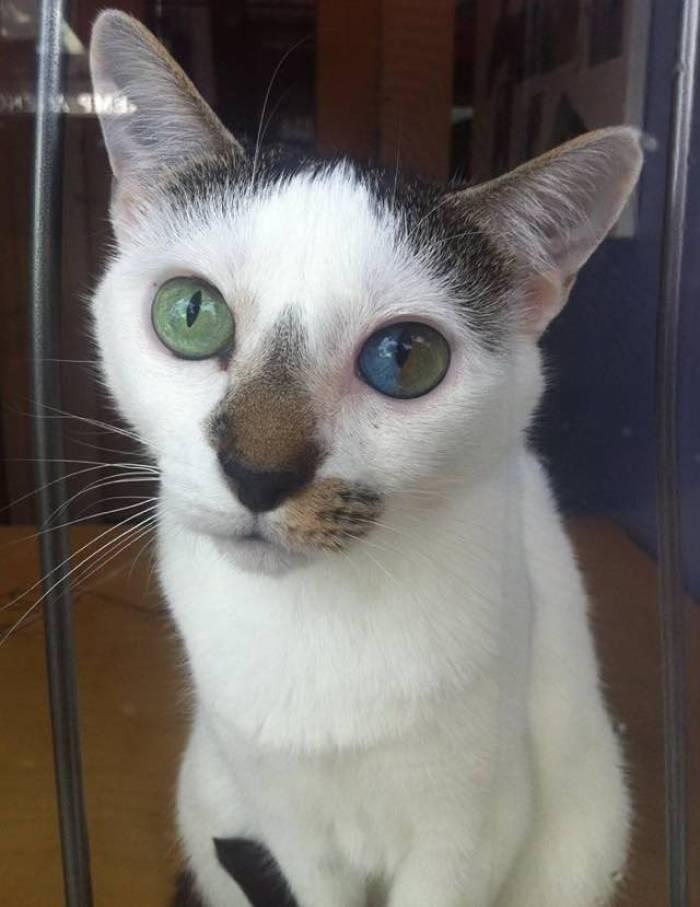 eyes1e