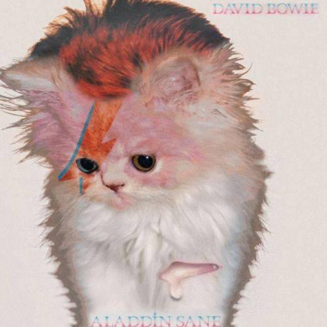 kitten bowie