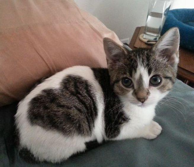 i love kitten