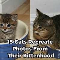 15 Cats Recreate Photos From Their Kittenhood