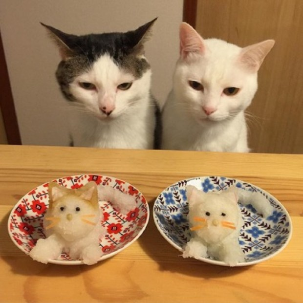 food envy 5