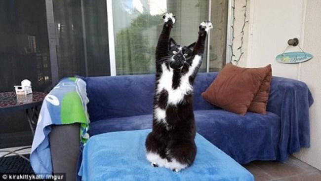 goal kitty 1