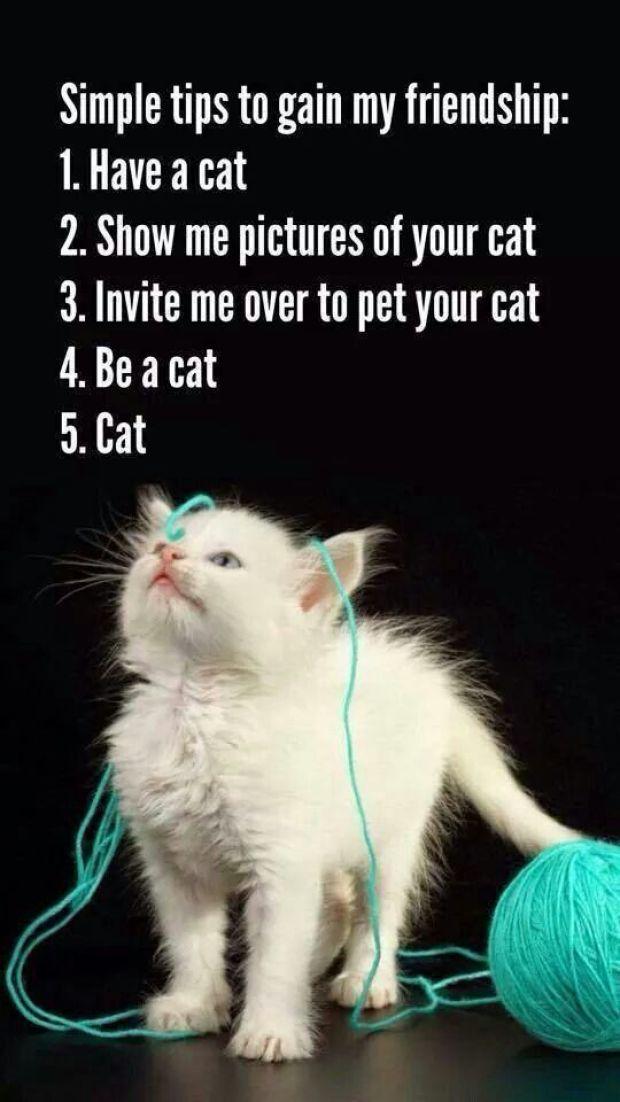 simple tips cat