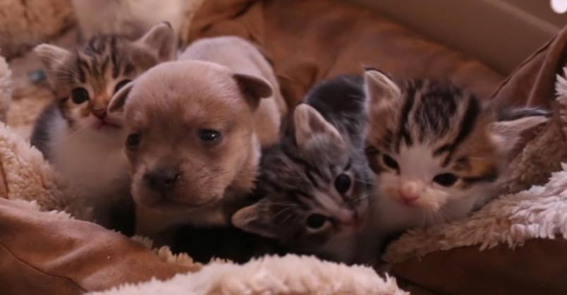 Orphan Puppy Gets the Love He Needs From Rescue Cat