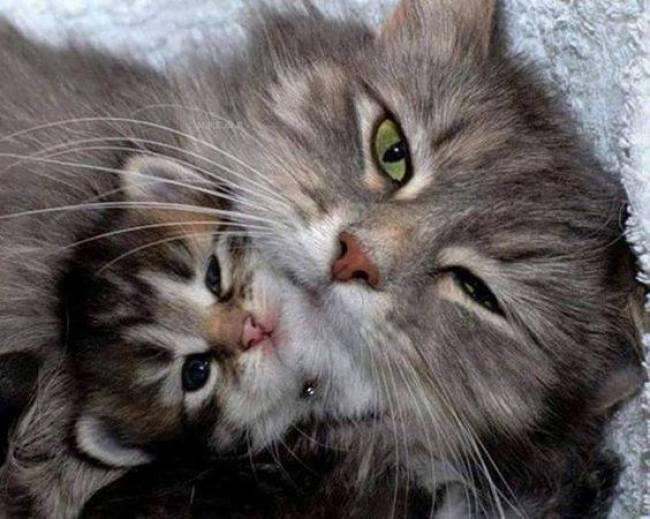 adorable mama and baby
