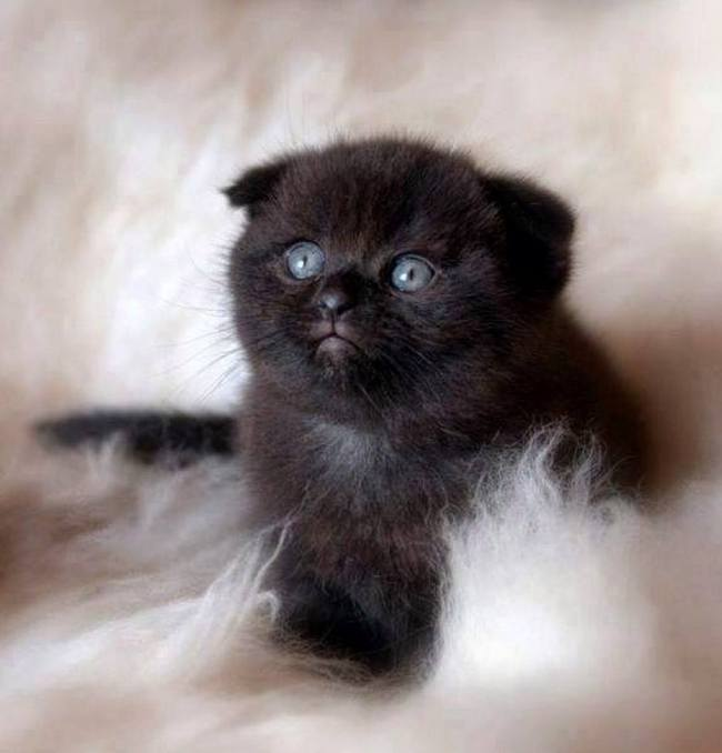 black on white furry