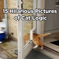 15 Hilarious Pictures of Cat Logic