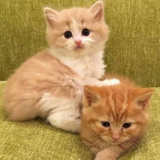 too cute copy 6