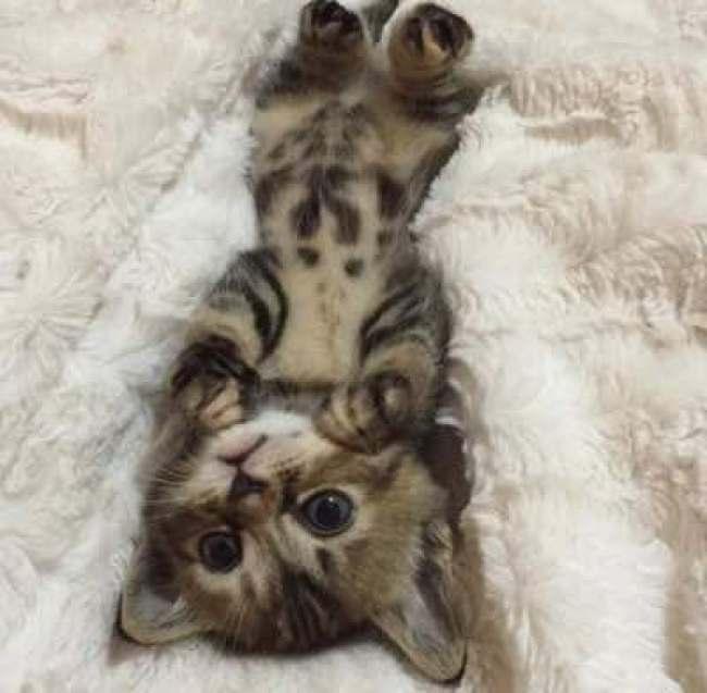 too cute 1