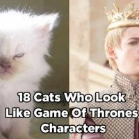 18 Pictures of Cats That Look Like Game of Thrones Characters