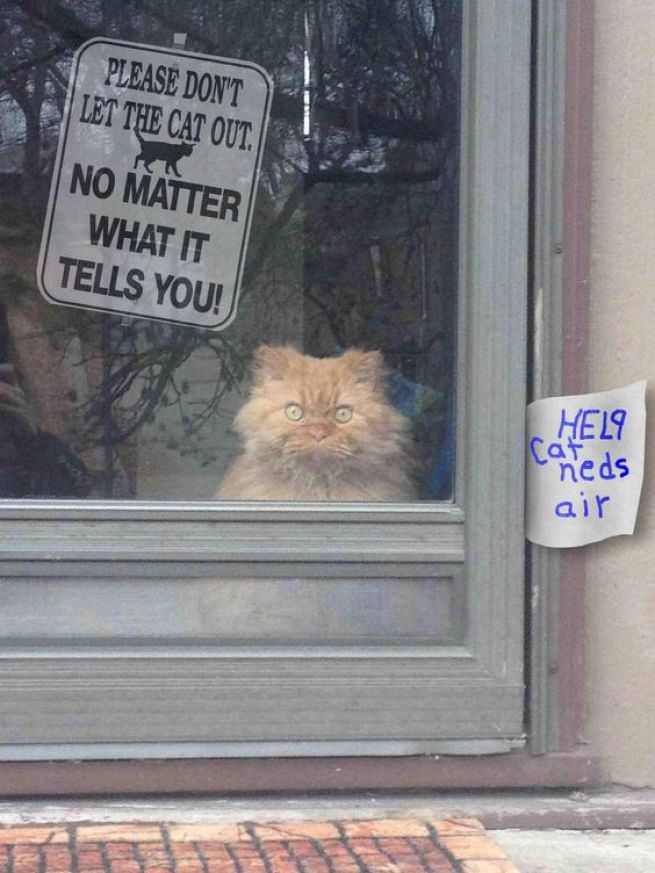 don't let cat out