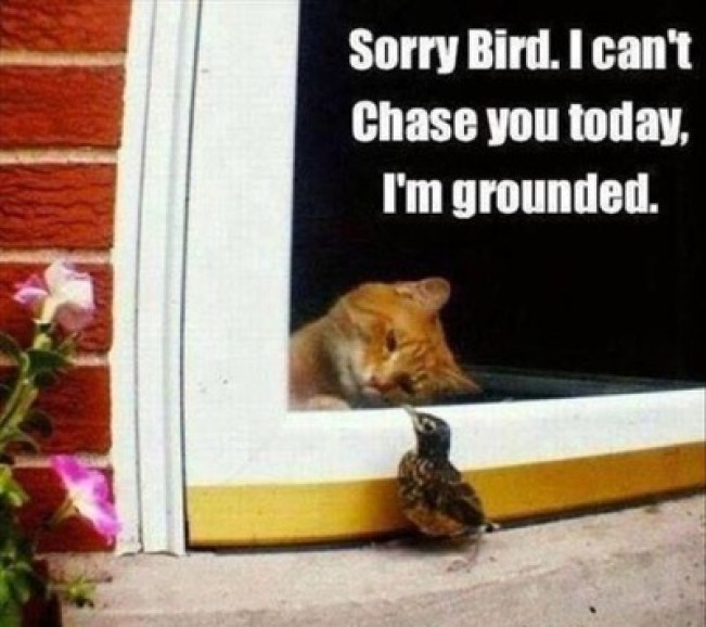 sorry bird lol
