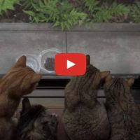 11 Cats? 10 Cats Can't Stop Thinking About Stray Visitor