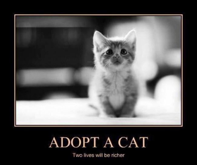 adopt copy